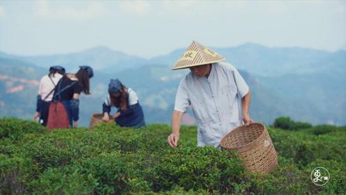 70岁老茶农引进新品种做电商,产量翻数十倍,千年茶村脱贫成典范