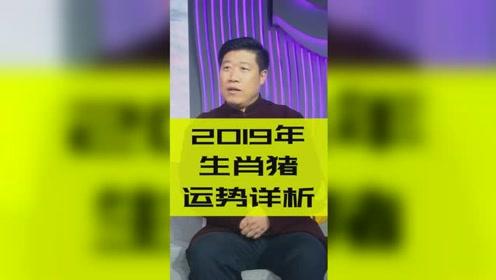 十二生肖2019年运势之生肖猪:本命年独家开运指南!