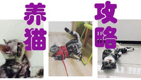 如果你想养猫的话,记得选对方法哦