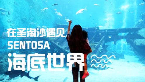 5万多条鱼扑面而来,新加坡海洋公园,这个水族馆太震撼了