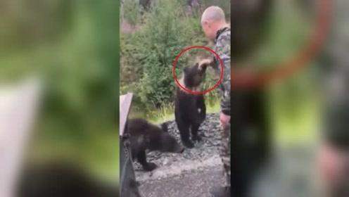 醉酒男子伸手抚摸小熊崽 被咬住手慌乱挣脱