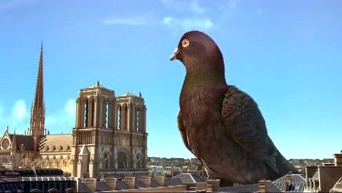 一只可怕的鸽子,瞬间就带来致命灾难