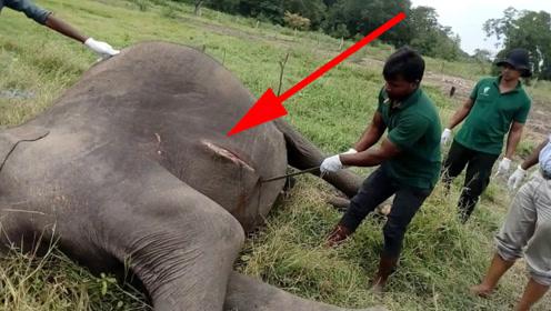 为什么说在非洲草原上,看到死亡的大象不能靠近?涨知识了!