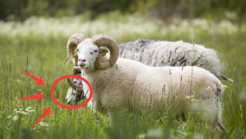 """身边有""""属羊""""的人要发财了,属羊人快来""""接喜""""吧!"""