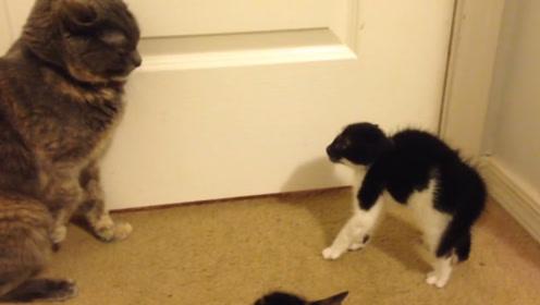 """小猫主动""""招惹""""大猫,大猫却毫无反应,这倒把小猫气坏了"""