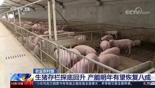 农业农村部:生猪存栏探底回升 产能明年有望恢复八成