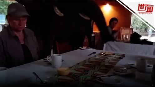 大象闯入餐厅四处觅食 游客表情僵住一动不敢动