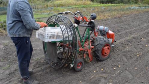"""牛人自制""""马铃薯""""收获机,一小时收获5亩地,500元造一台"""