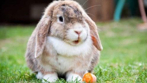 生肖兔的命理解析!准的没话说,你家也有属兔人吗?