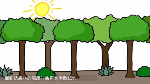 你们都想错了,大多数雨都不会到达地面,原来跟树有这么大关系!