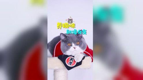 养猫就像养女友,有了猫还需要女朋友么?