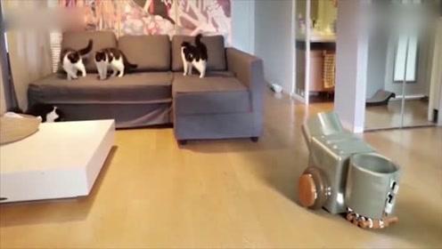 实验证明一杯水可以变成6只可爱猫咪 你信吗?
