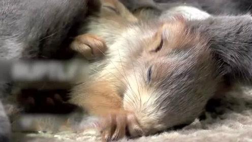 4마리 아기다람쥐를 키우는 고…