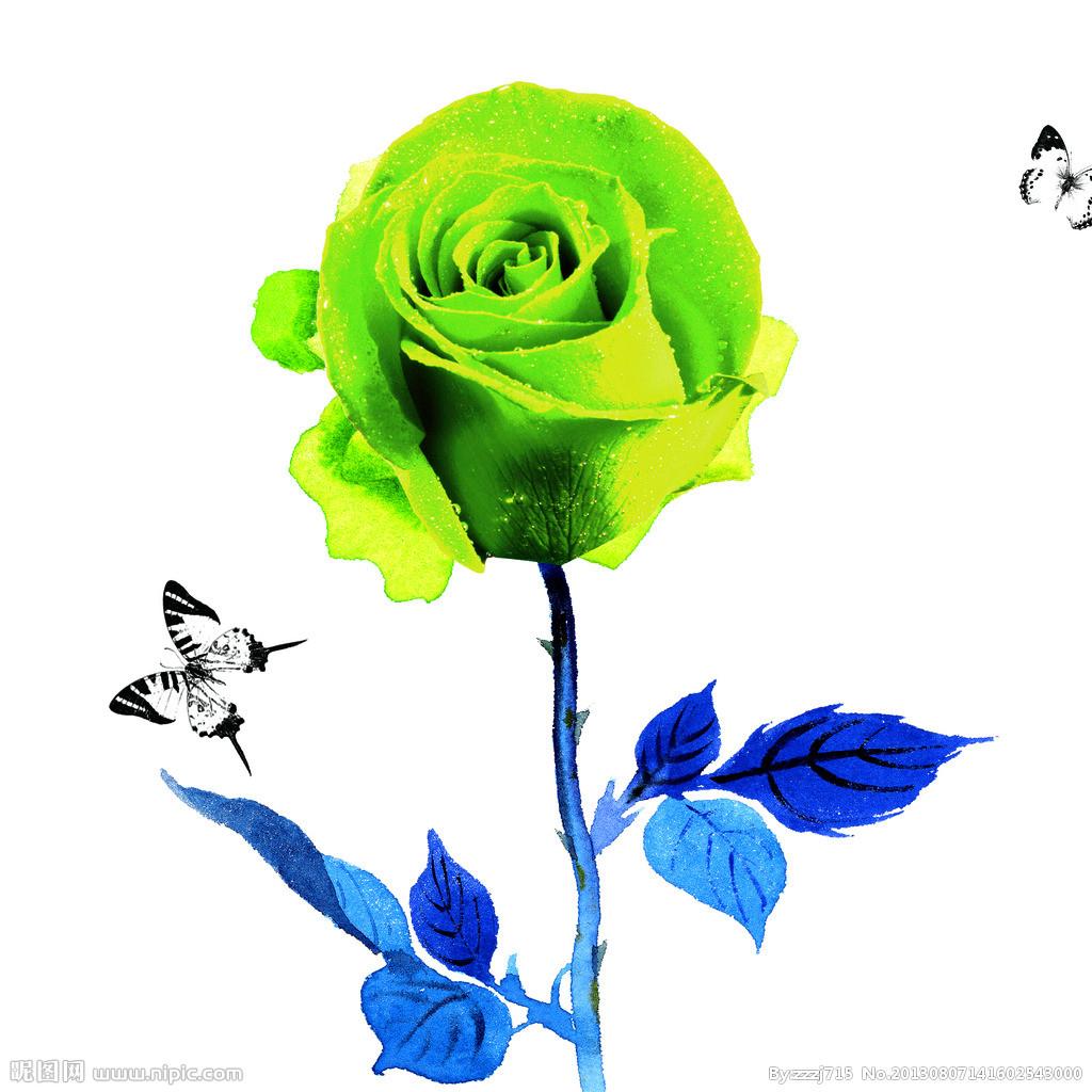 铅笔手绘玫瑰花图片