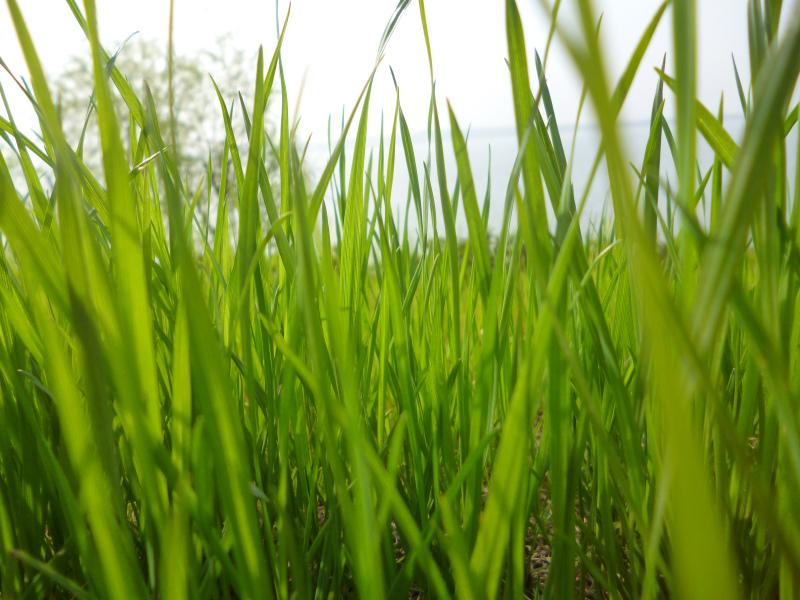 在路边拍的小草