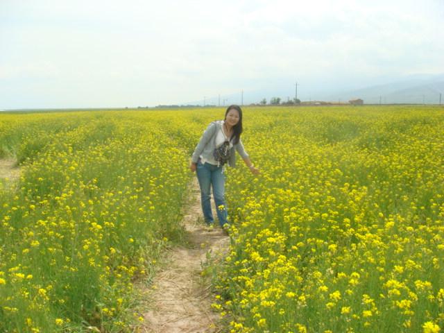 青海湖的油菜花。