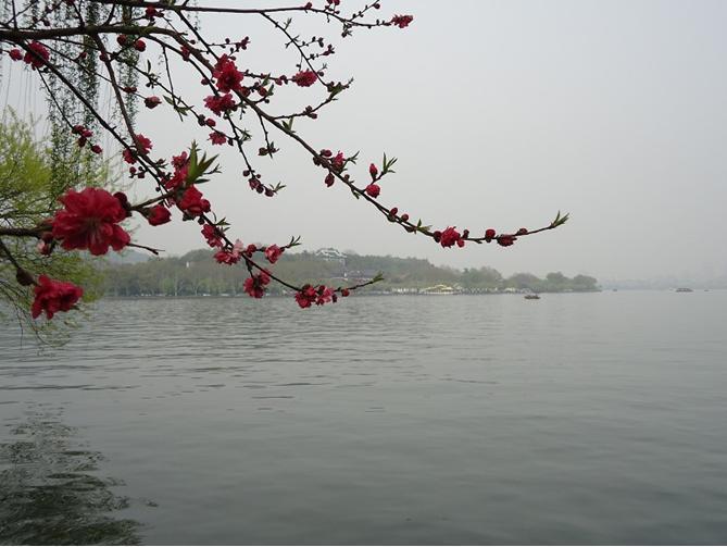从苏堤忘川西湖,又是一道亮丽的风景线
