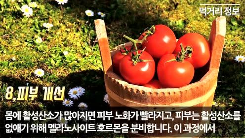 토마토의 효능과 부작용, 먹는…