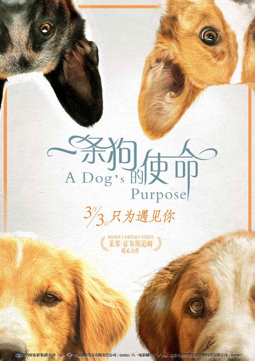 WEB-720P 一條狗的使命 A Dog's Purpose.2017.杜比AC3音頻[2.93GB]